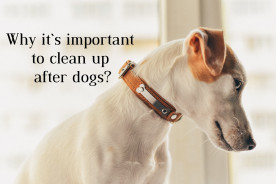 Why It`s Important to Clean Up After Dogs?